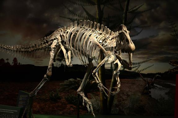 This Antarctic dinosaur, Cryolophosaurus, was formerly known as Elvisaurus.