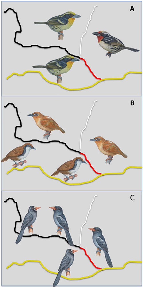 bird-graphic.jpg