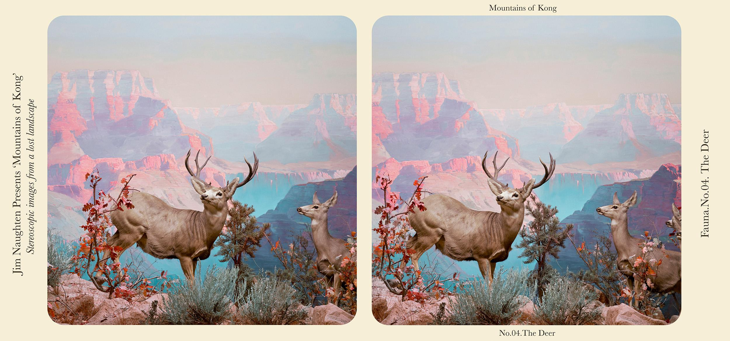 """A stereograph called """"The Deer"""""""
