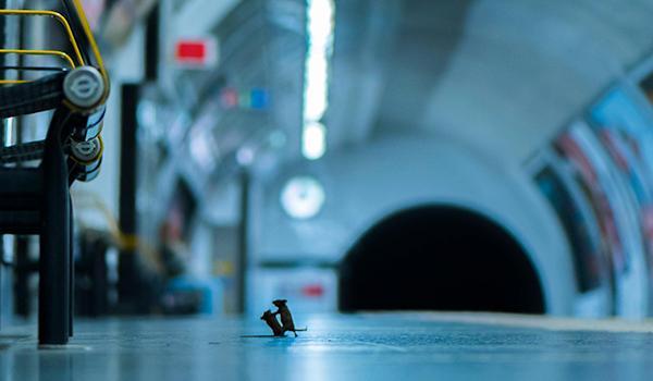 Station Squabble by Sam Rowley