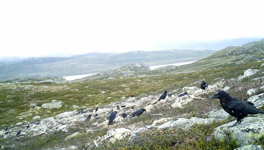 birds Norwegian Natl Conservation Auth.jpg