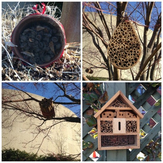 Simpler insect hotels in the Ripley Garden