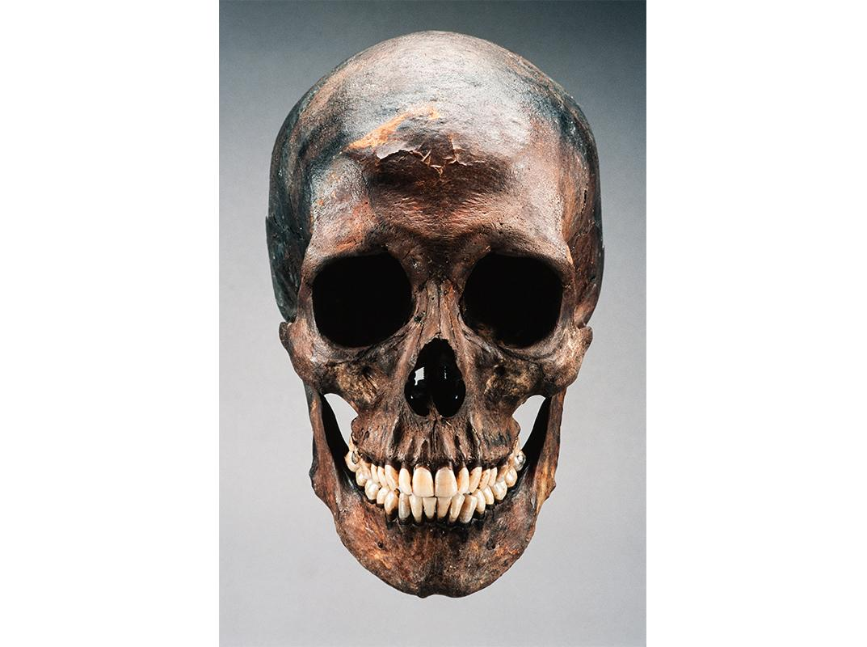 Skull, Robert Kennicott