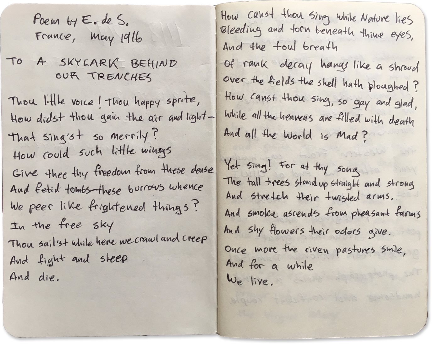 Bird Poem Revised