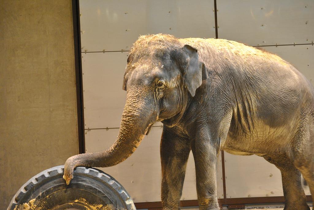 Research into animal behavior