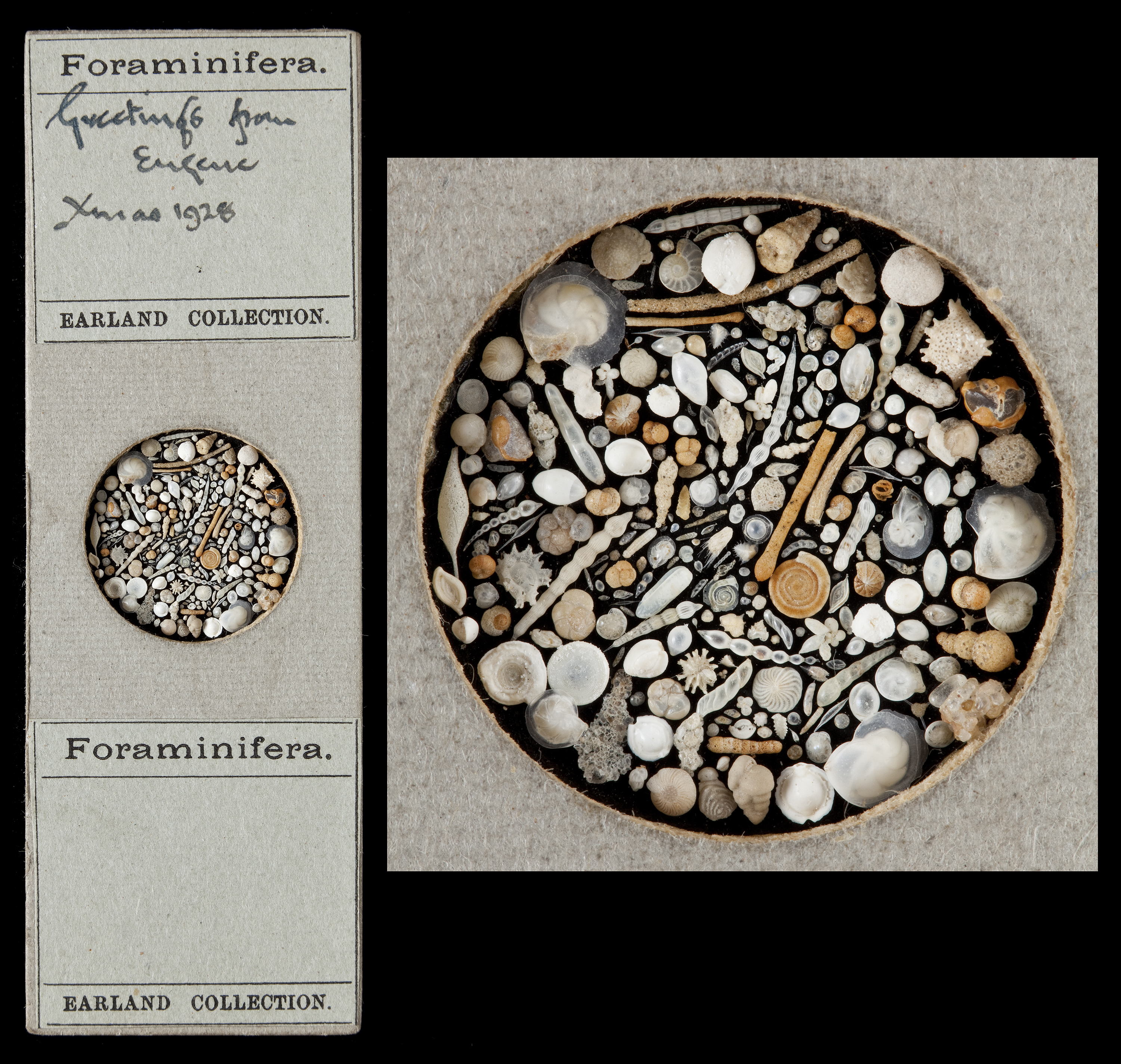 foraminifera_greetings_eugenie_xmas1928.jpg