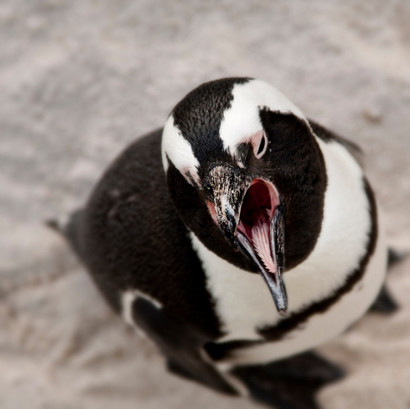 14 Fun Facts About Penguins Science Smithsonian