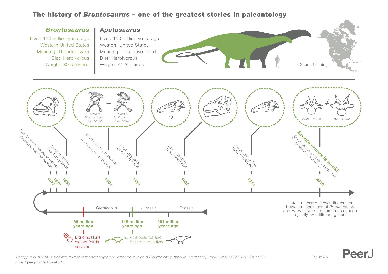 Brontosaurus_infographic_NoText_HRes copy.jpg