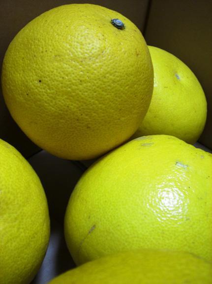 The pomelo fruit