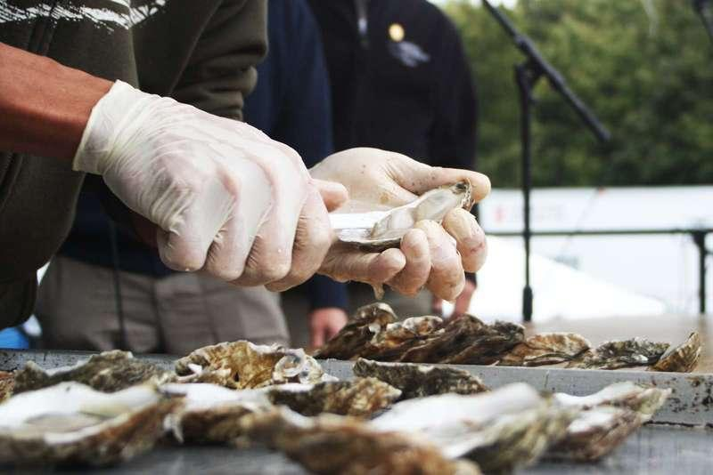 Courtesy of the Wellfleet Oyster Festival