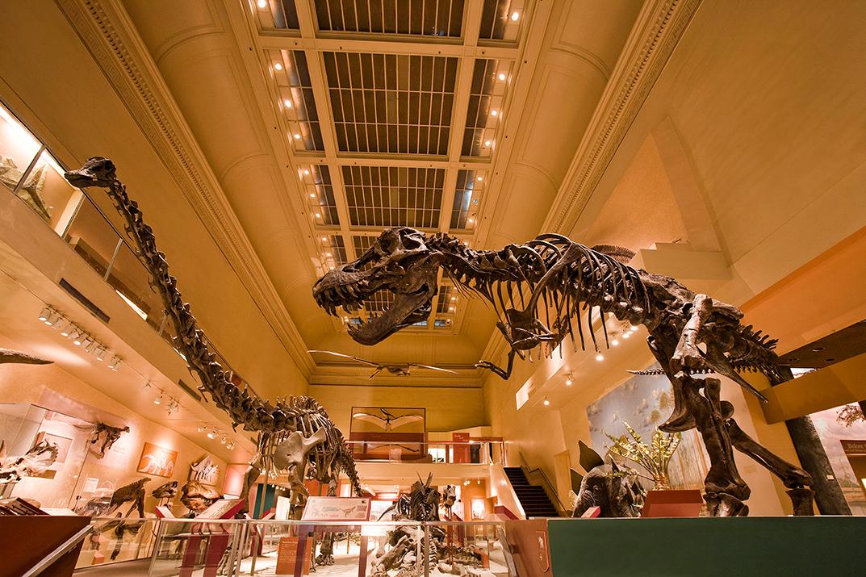 Hall of Dinosaurs, 2012