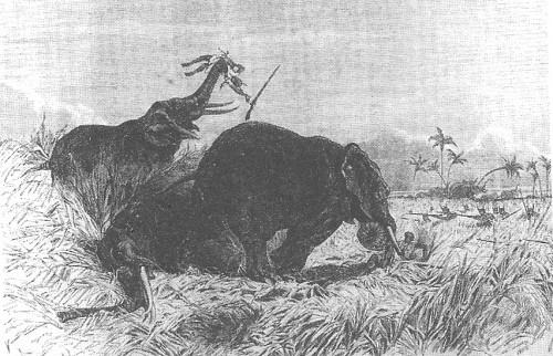 Dahomey's female hunters, the gbeto, attack a herd of elephants.