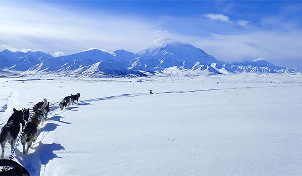 Denali's dogsled teams mush for weeks at a time to the far-flung corners of a park that stretches over 6 million acres.