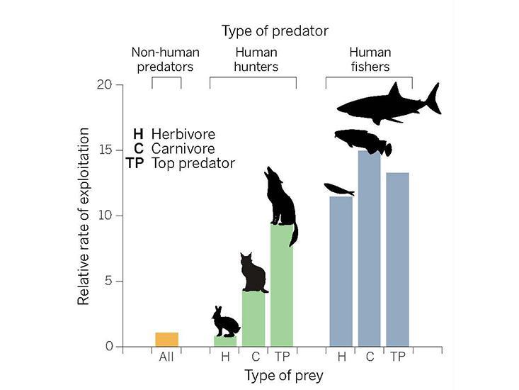 predators-chart.jpg