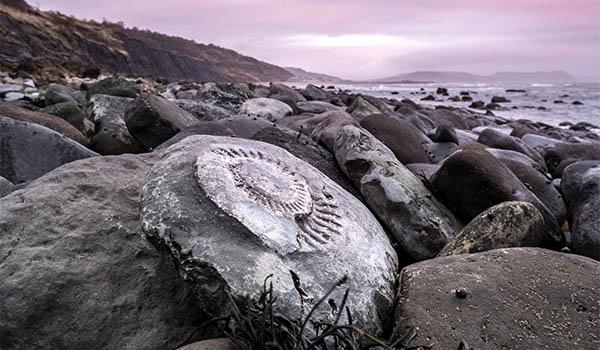 As erosion reshapes England's Jurassic Coast, ancient fossils are revealed.