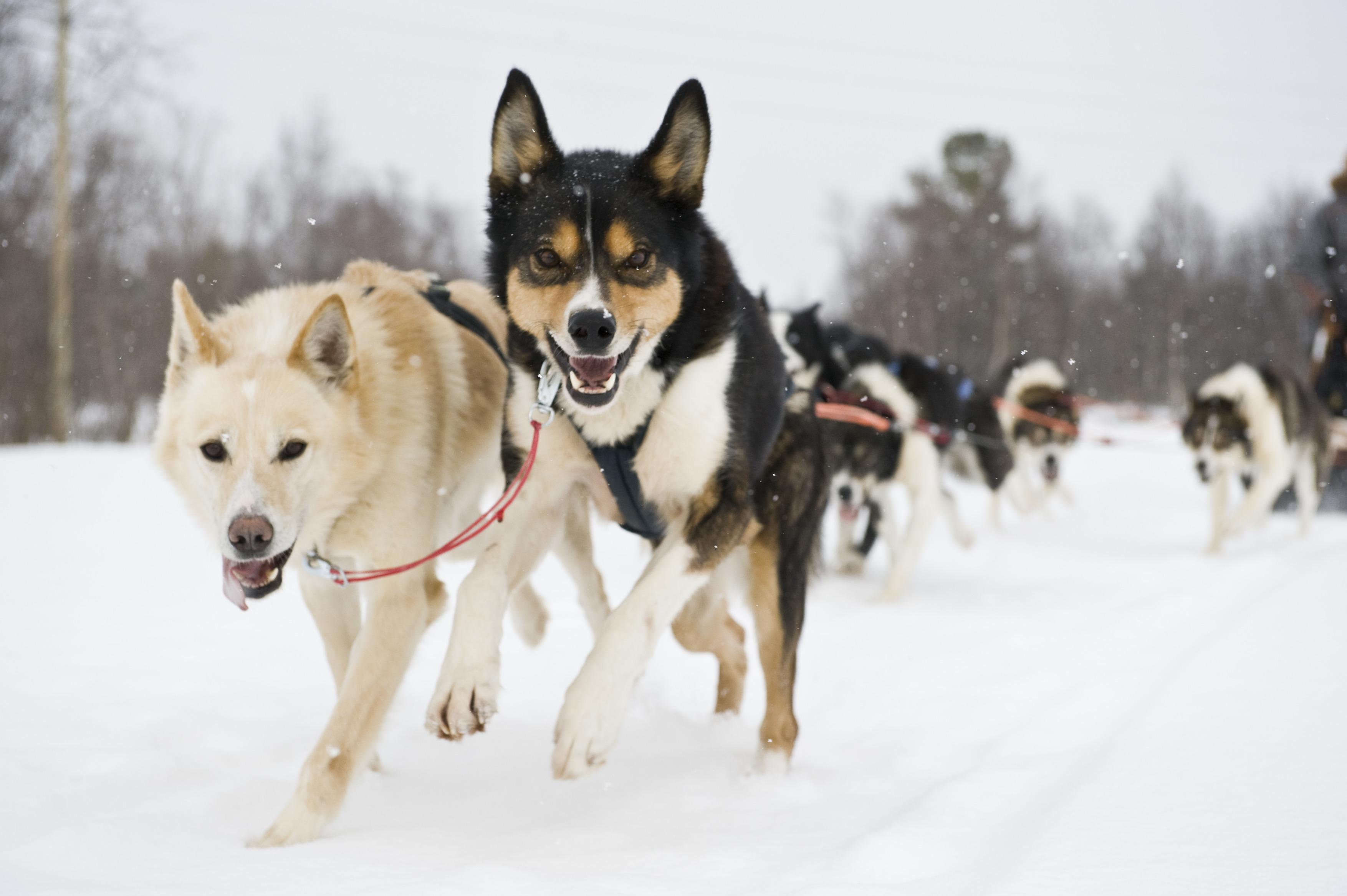 Dog-sledding-Finnmark--072009-99-0242.jpg