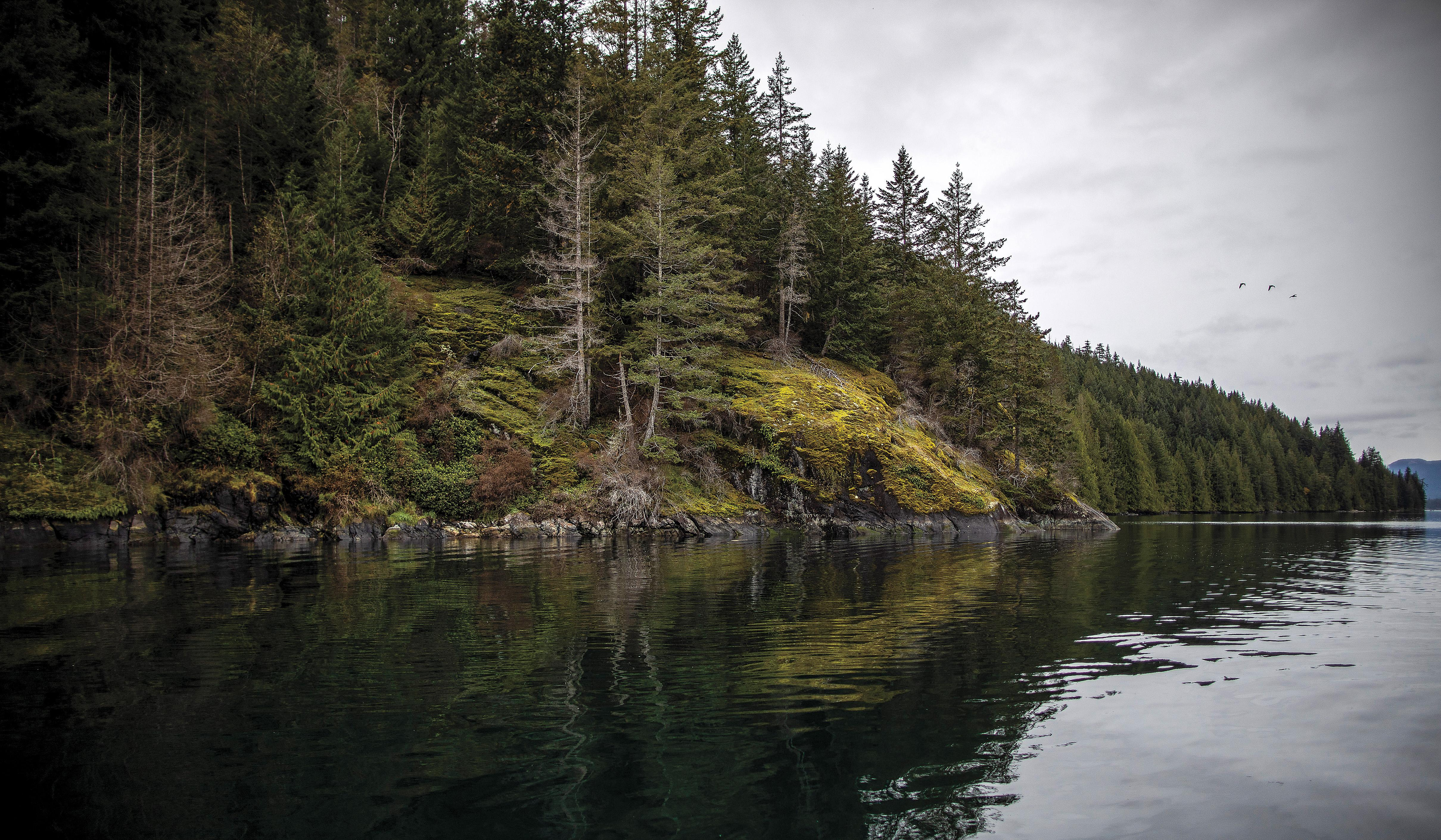The coastline of Quadra Island in British Columbia. Some scientists believe that prehistoric humans spent thousands of years in the region.