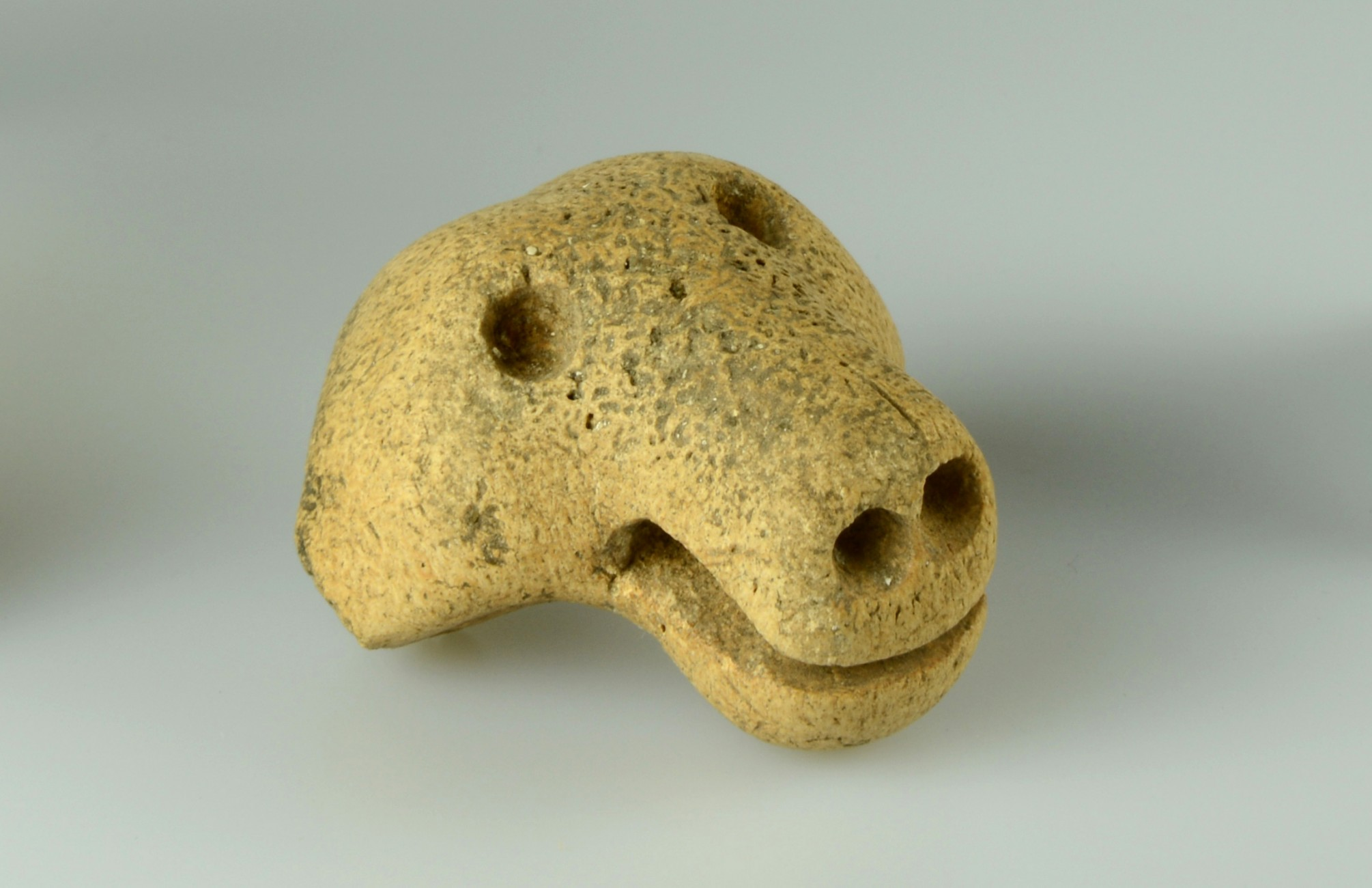 A bear's head