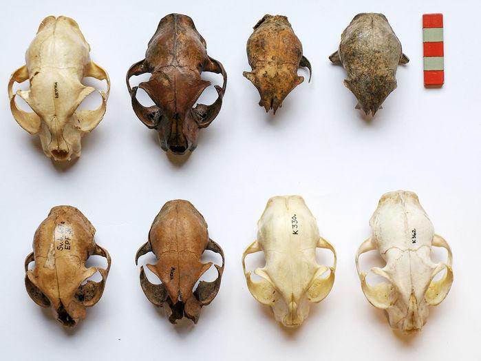 skulls_16x9_0.jpg