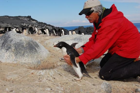 Scientists in Antarctica are studying how climate change is affecting Adélie penguins.