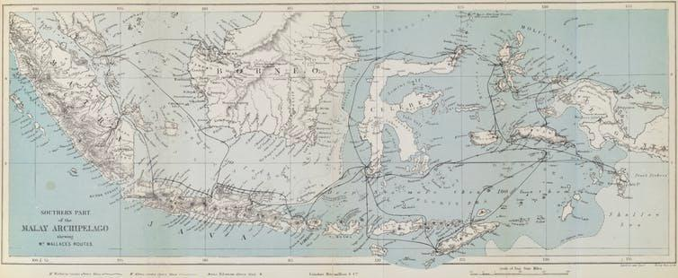 An 1874 map of the Malay Archipelago, tracing Wallace's travels.  Trustees of the Natural History Museum, 2018,