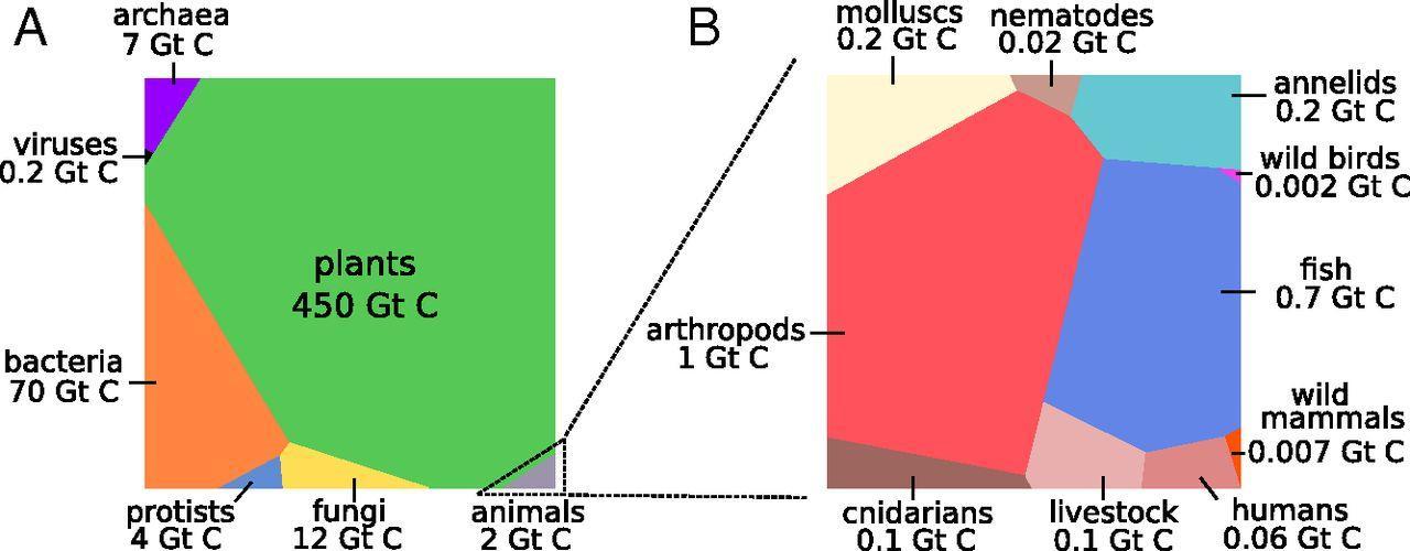 Biomass Chart