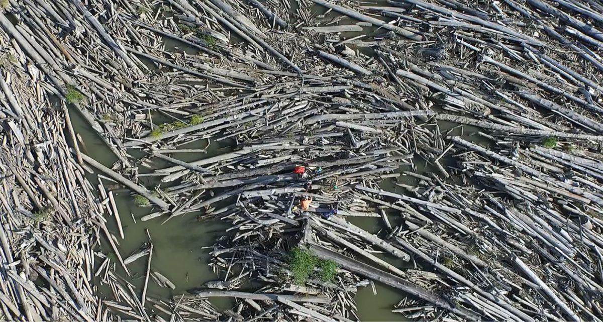 Massive amounts of wood