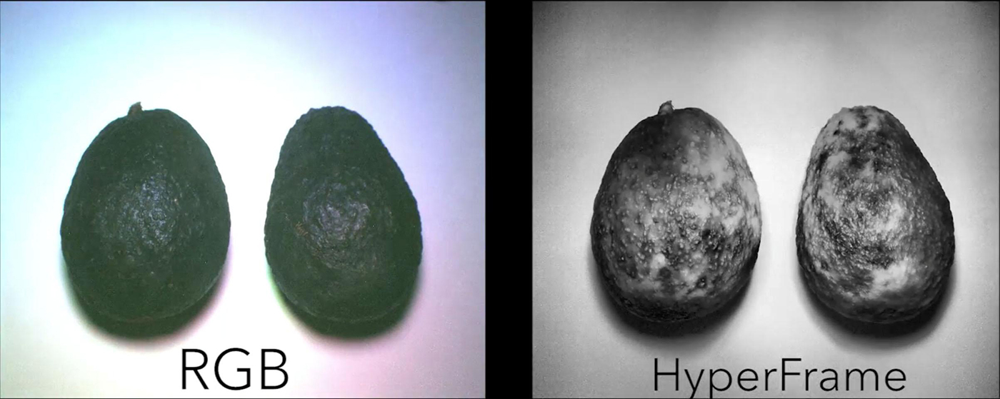 hypercam-avocado-1.jpg