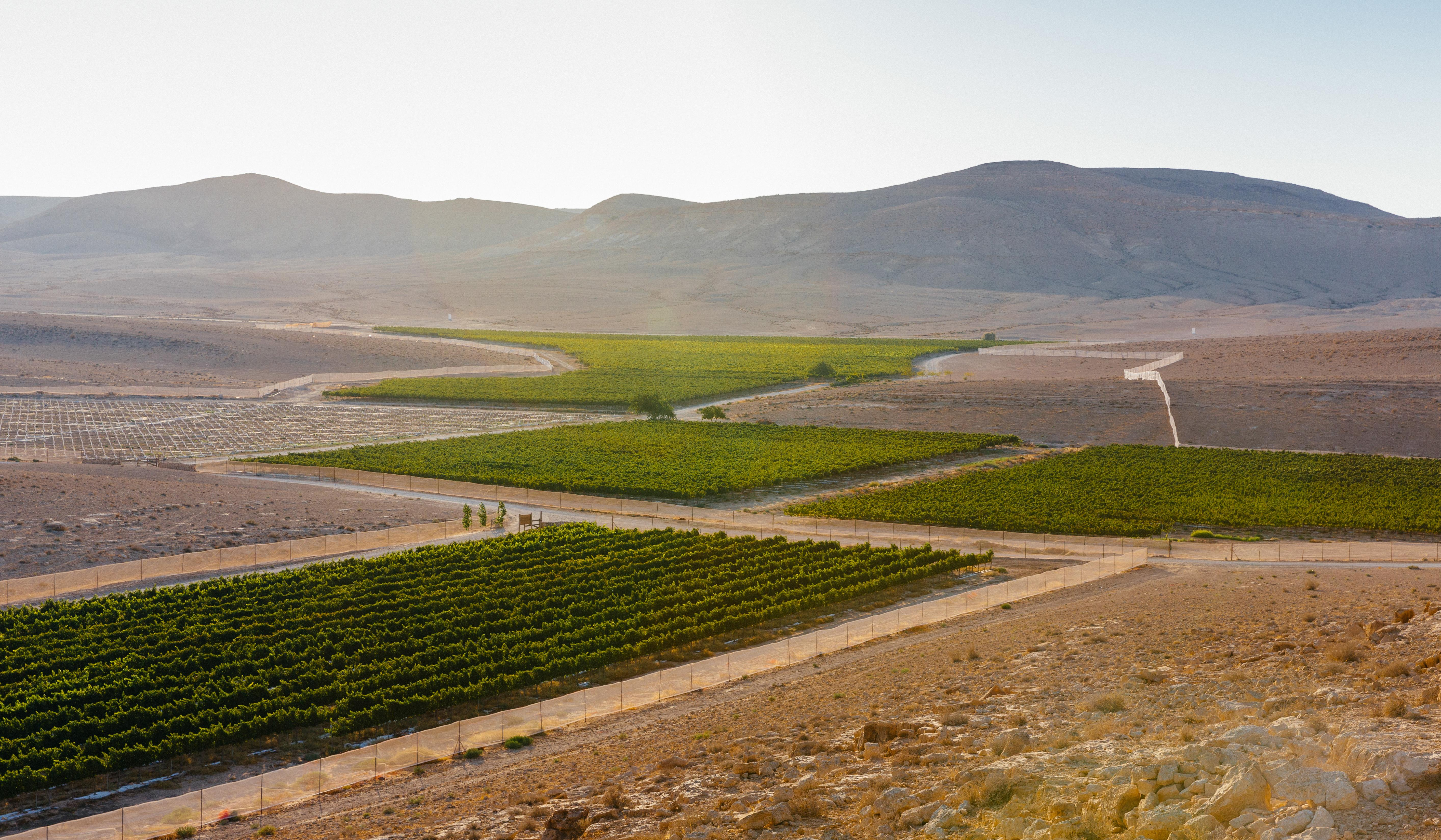 Green patches of Nana Estate Winery in the arid desert.