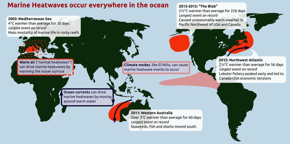 Marine heatwaves occur everywhere in the ocean.