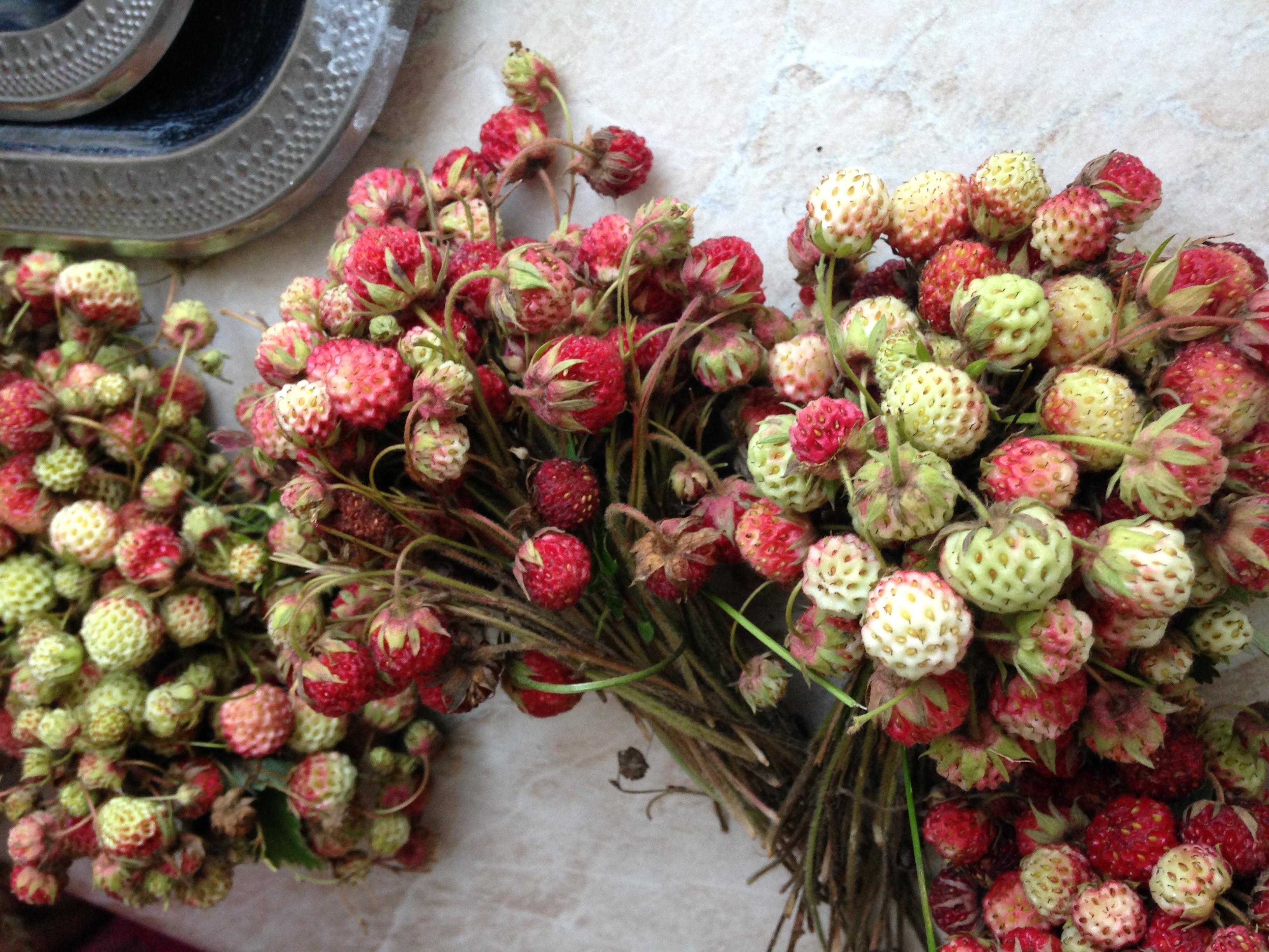 Wild foraged strawberries