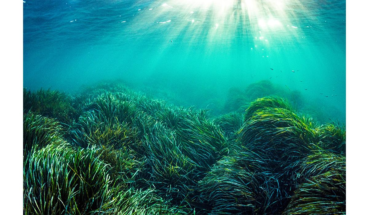 Spain: One of the oldest living organisms on Earth is a colony of Neptune grass in this vast meadow of the plant in the Mediterranean Sea. But warming ocean temperatures pose a threat to the species, Posidonia oceanica. Some scientists predict it may become extinct by midcentury.