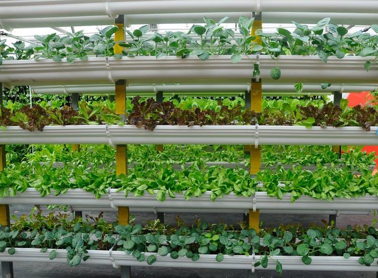 Vertical indoor farm