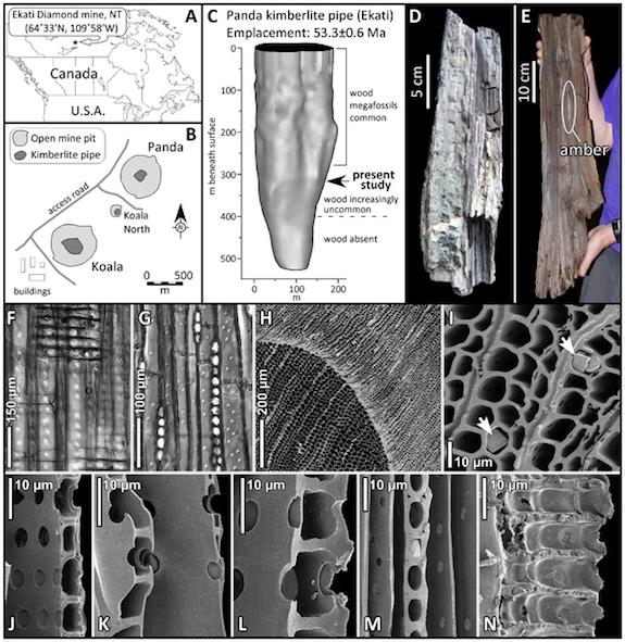 Images of the fossilized wood, and where it was found.