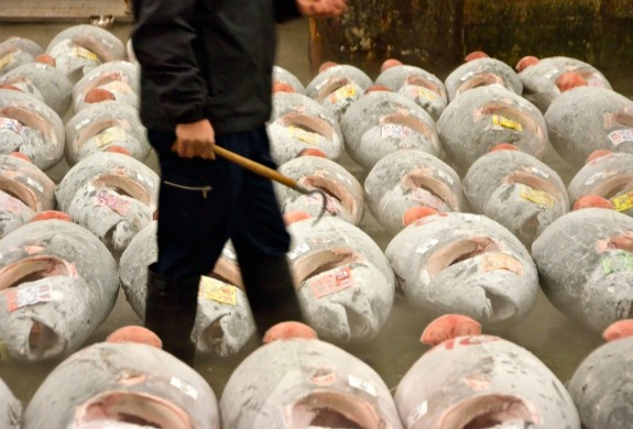 Carcasses of giant bluefin tuna