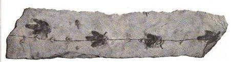A large stone slab