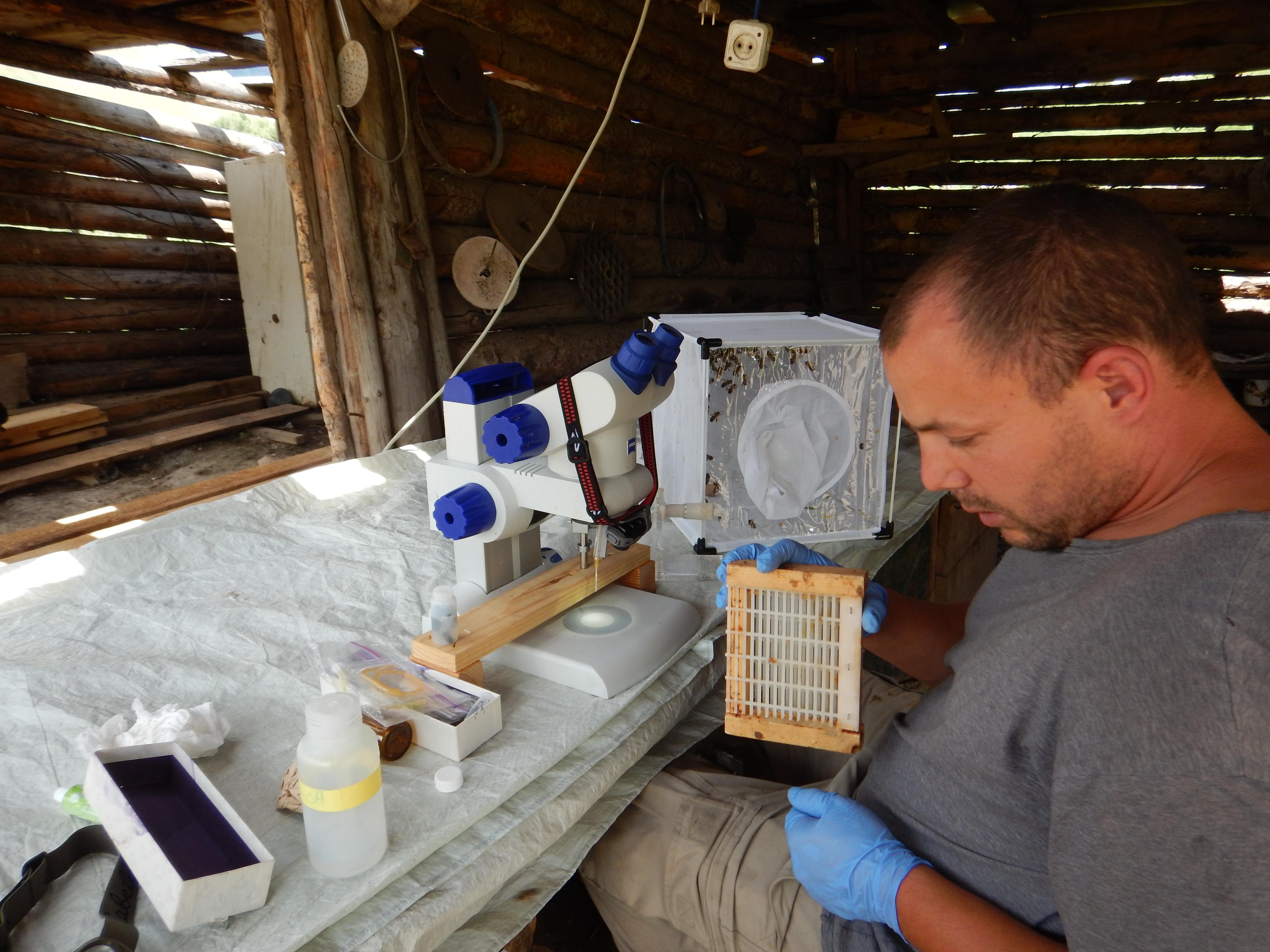 Brandon Hopkins collecting bee semen_credit Steve Sheppard.jpg