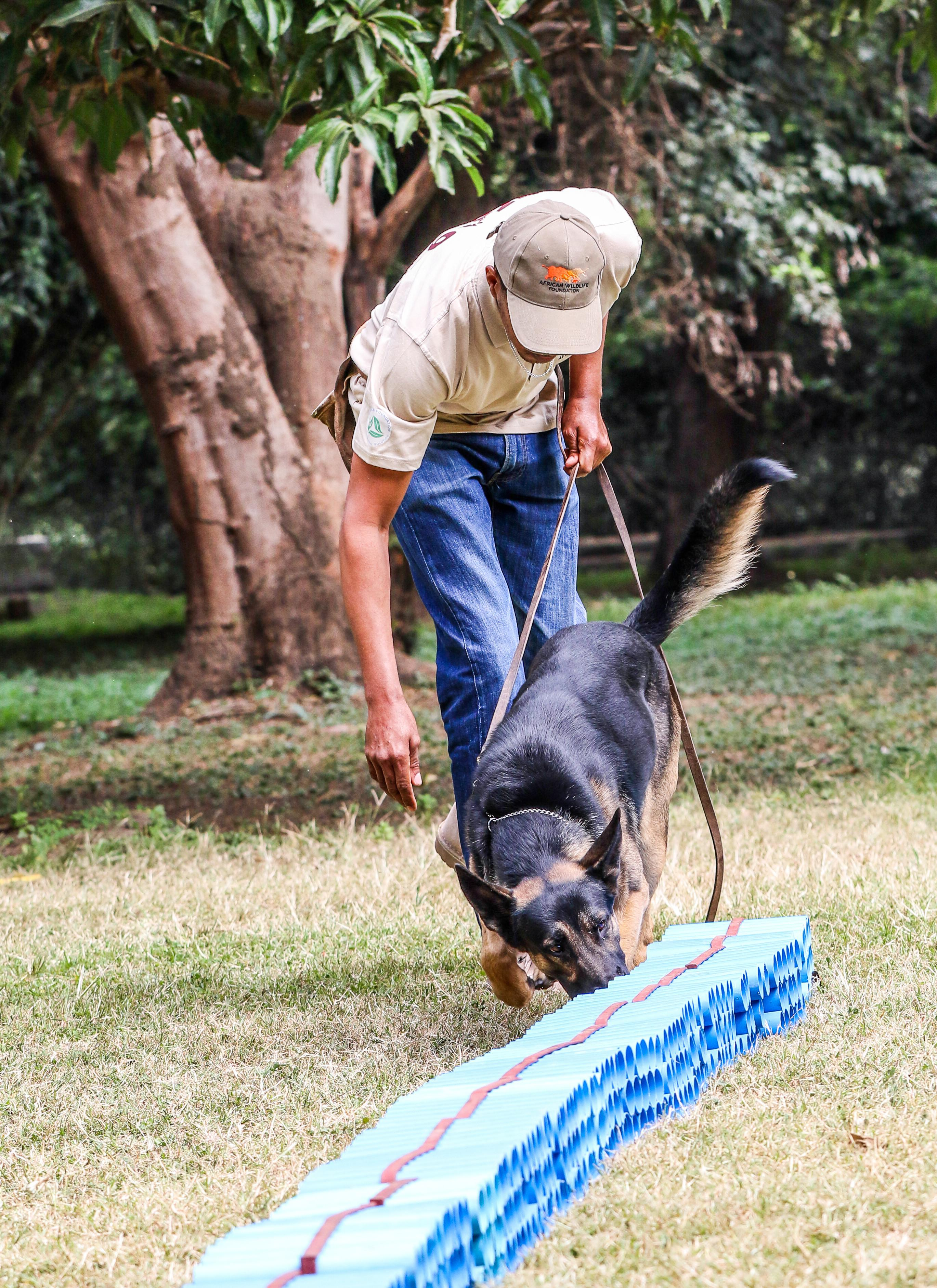 canines for conservation dog and handler 3