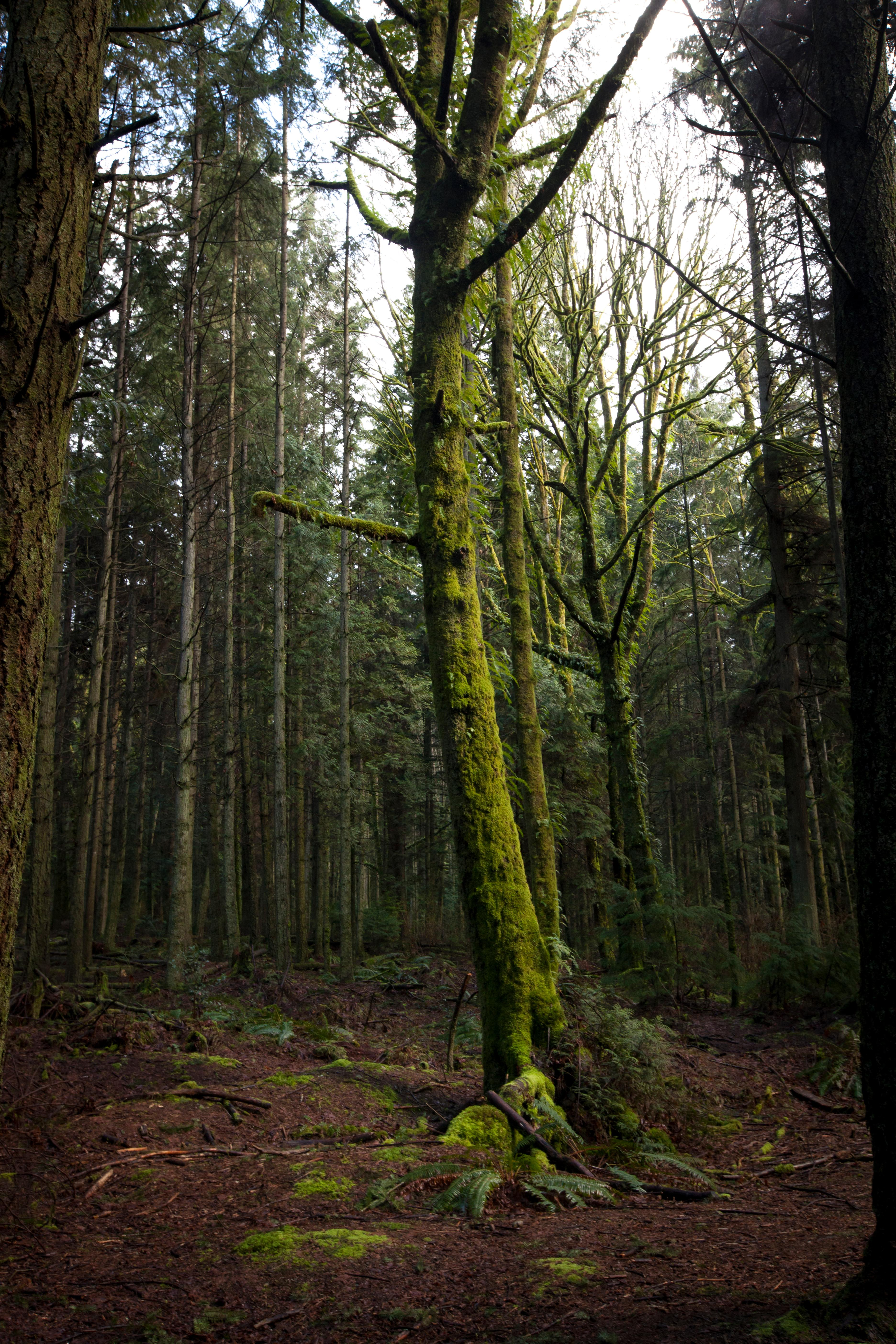 Forest networks feed rain systems