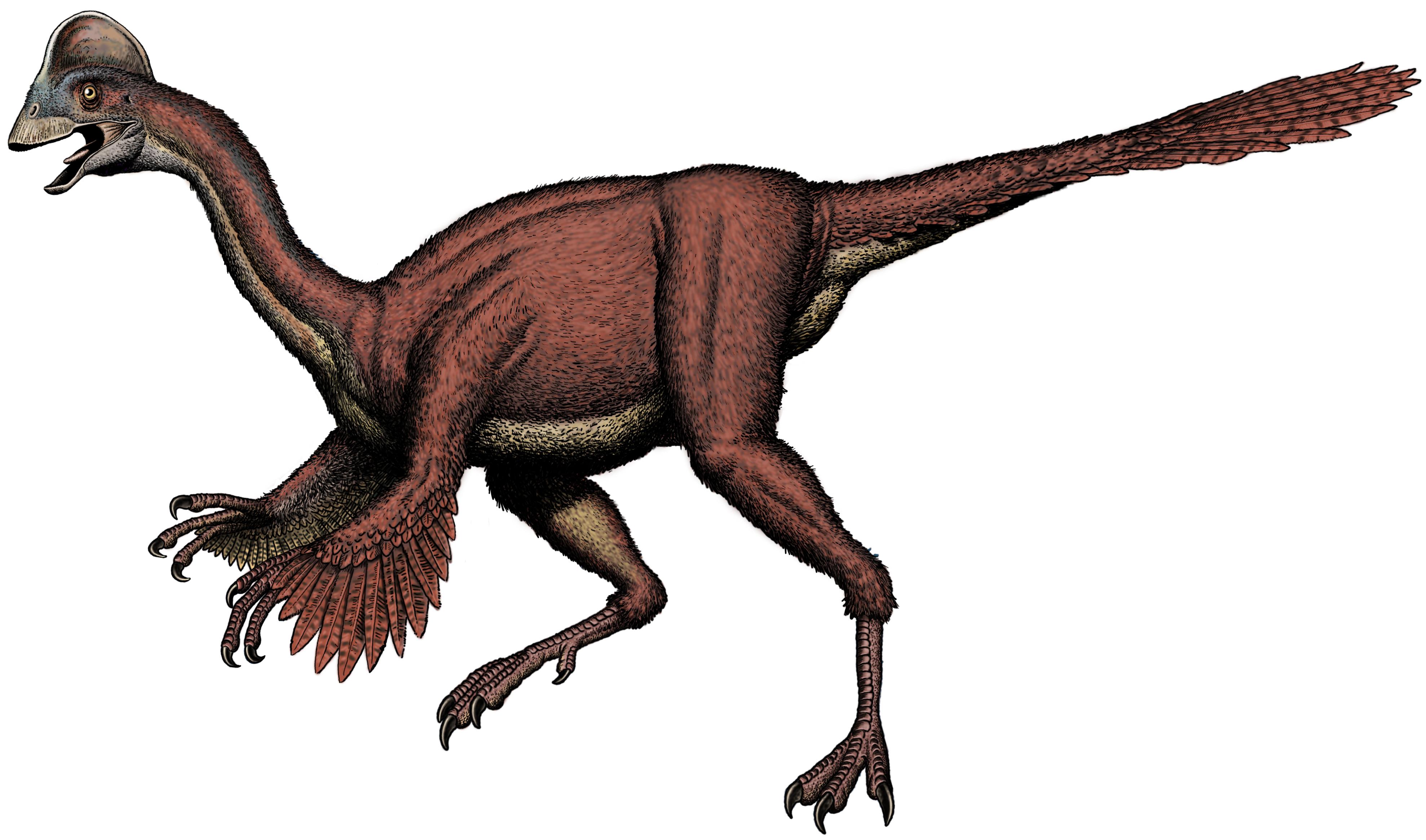 Oviraptorosaurian-pic-3