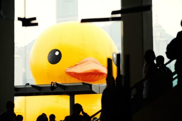duck-closeup.jpg