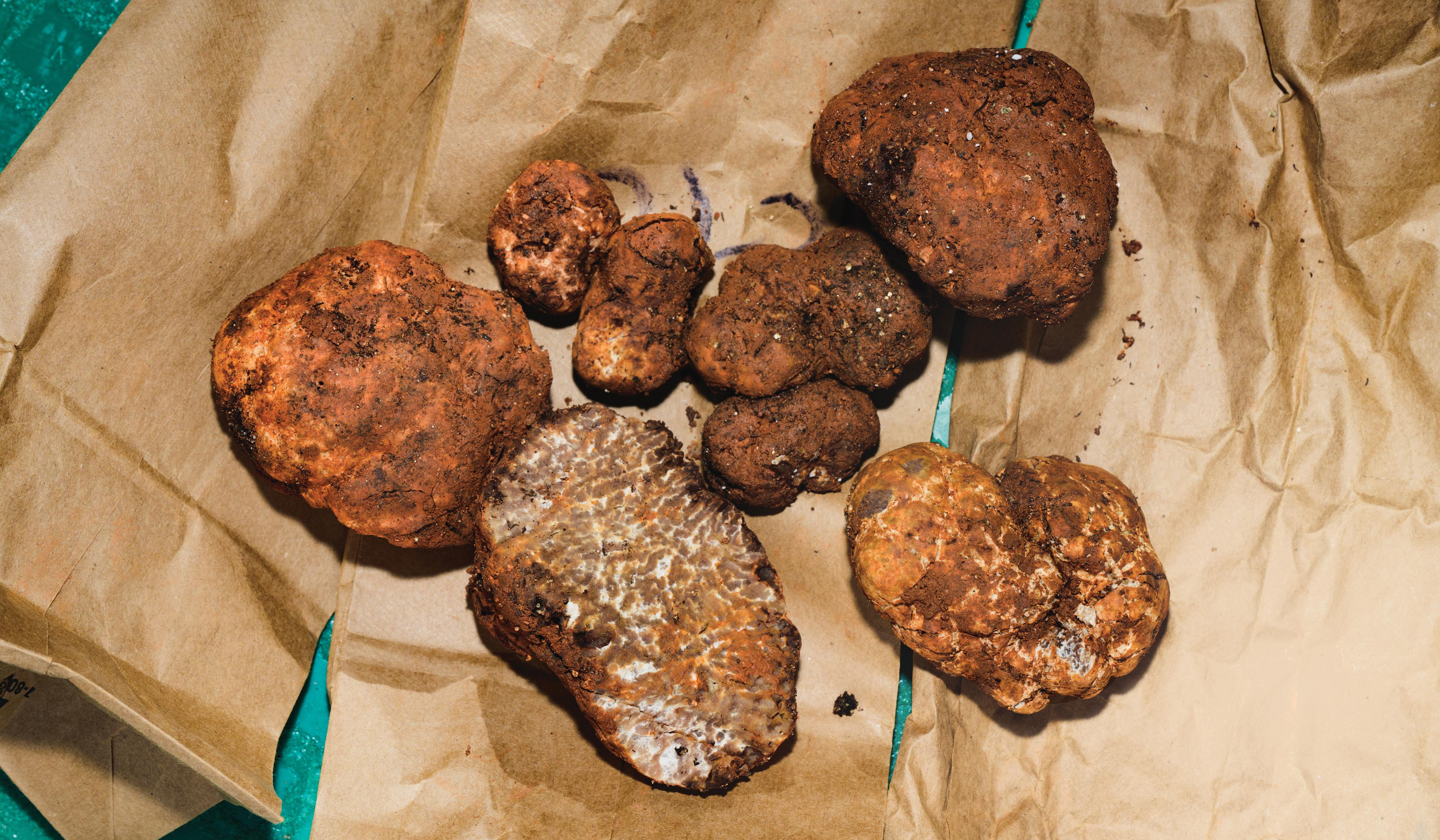 Freshly gathered truffles at Burwell Farms are the fruit of a bold collaboration—and a proprietary cultivation technique.