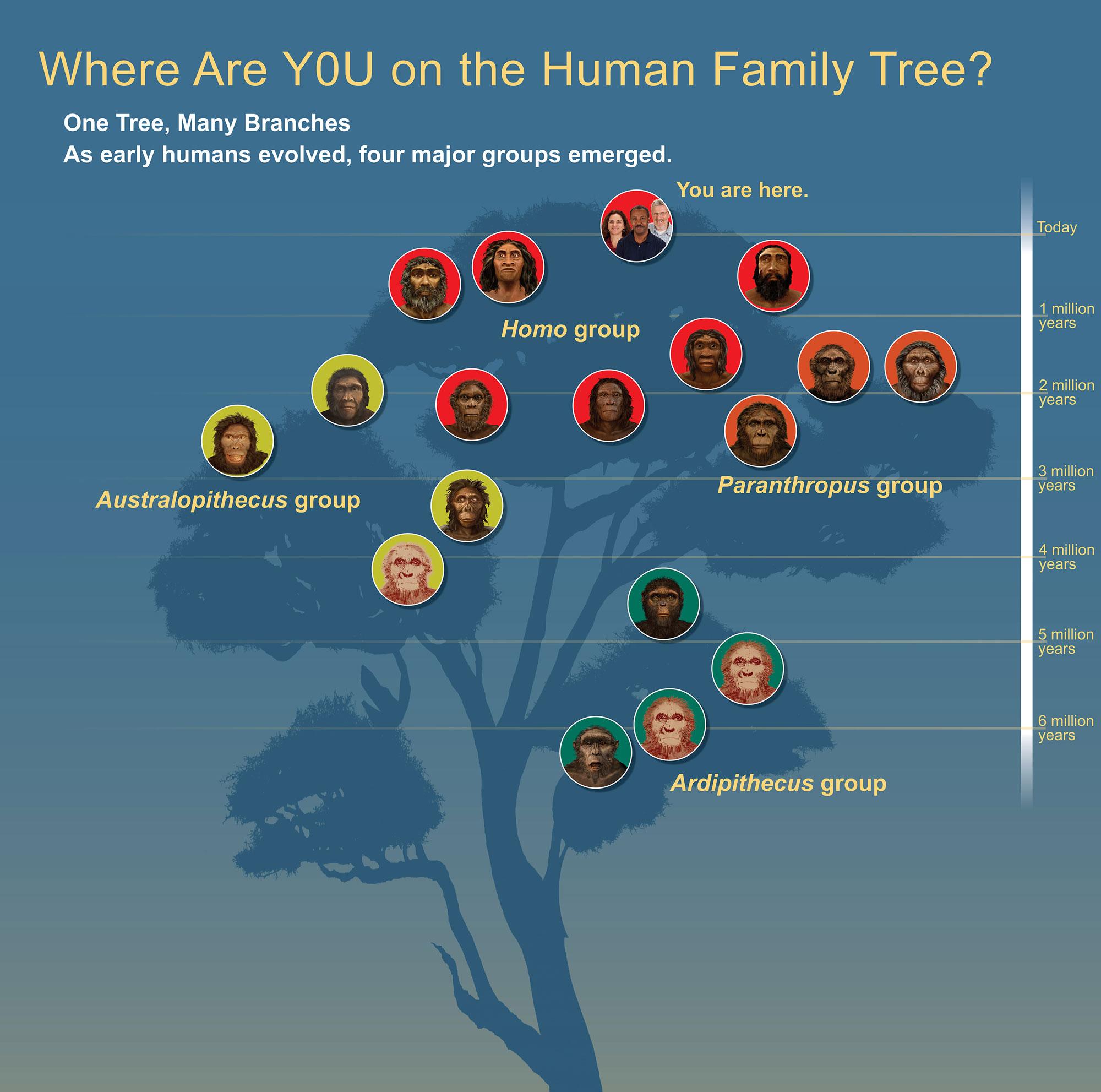Árbol genealógico humano