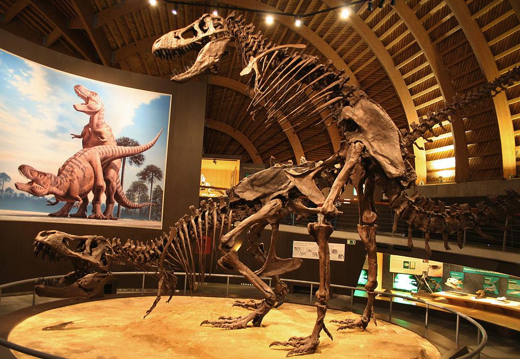 T rex mating at MUJA
