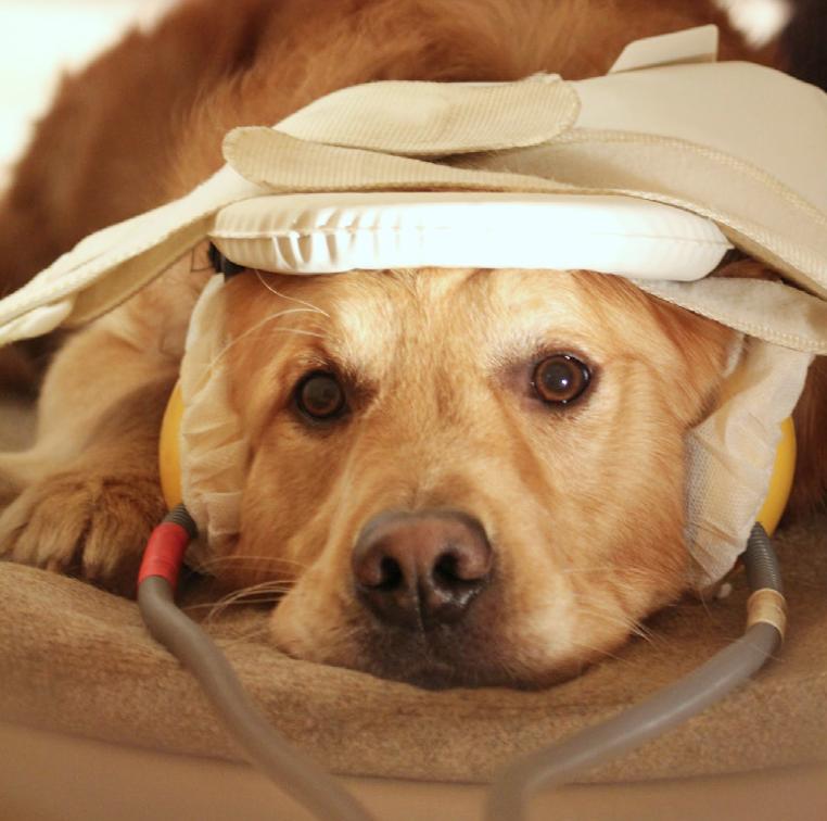 dog in scanner.png