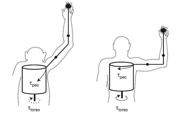 outward-facing shoulders