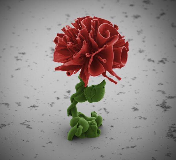 red-nanoflower-Wim-Noorduin.jpg