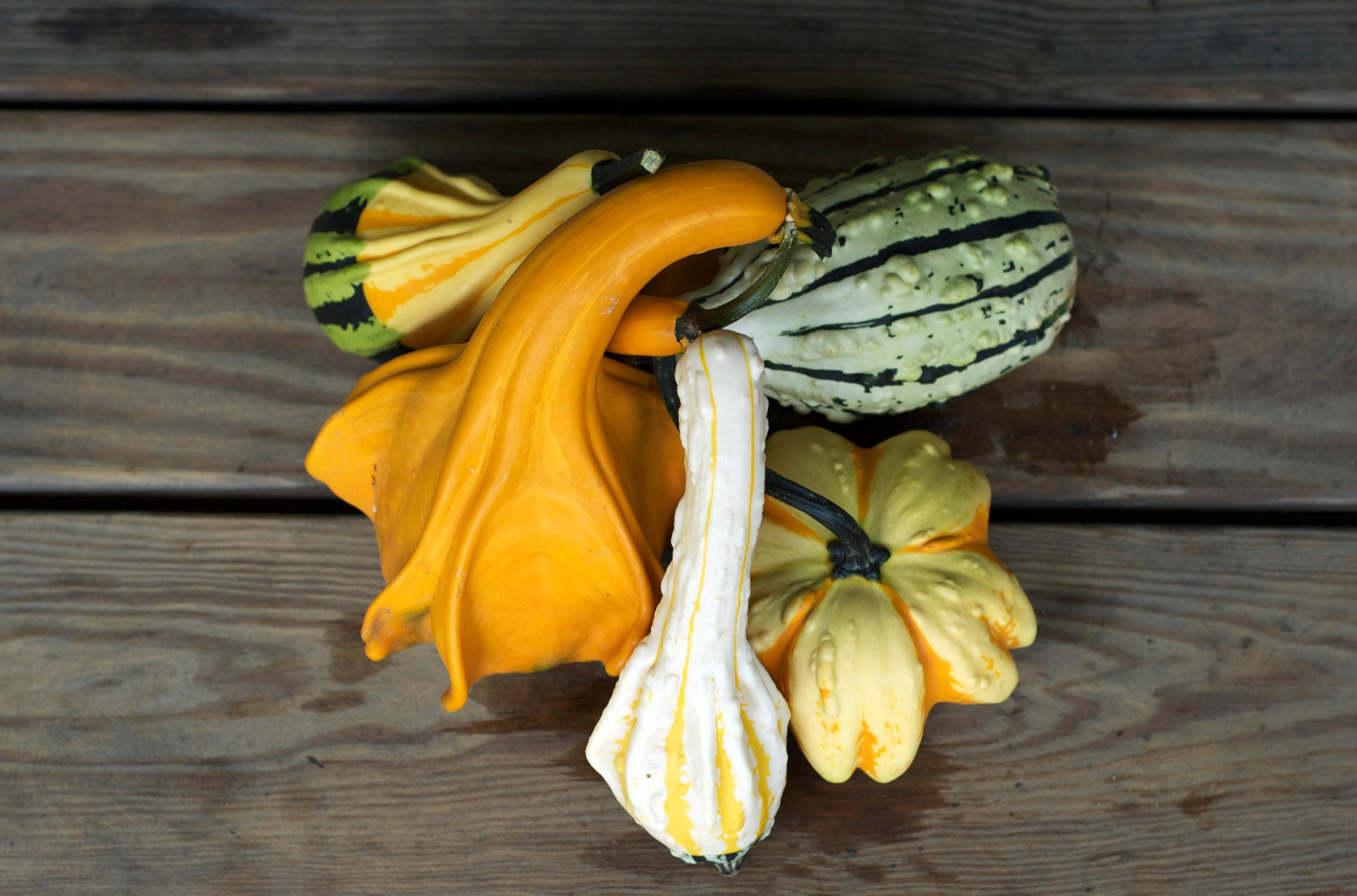 the science behind decorative gourd season science smithsonian rh smithsonianmag com