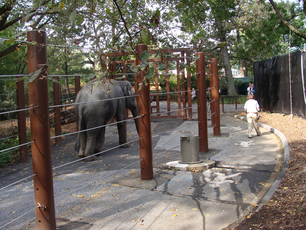 "One of the elephants on the ""Elephant Trek"" exercise trail."
