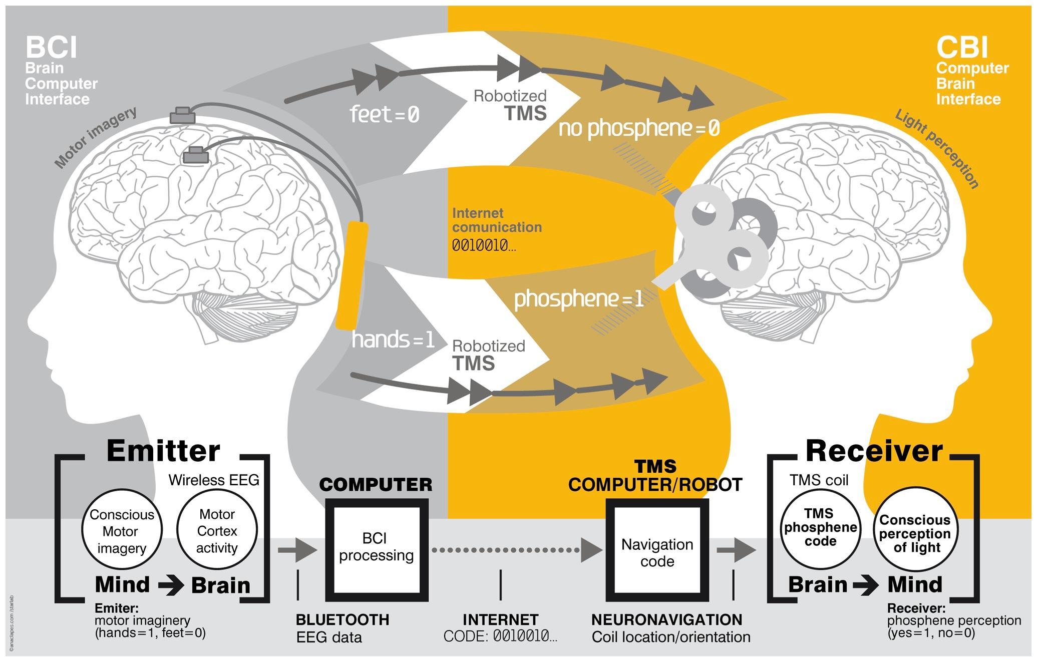 How Brain-to-Brain Communication Works